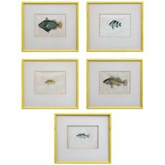 Early Hand-Colored 19th Century Fish Prints Set of Five