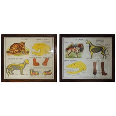 Pair of Antique French School Posters of Cat and Dog