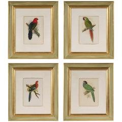 Set of Four Framed Prints of Parrots