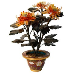 Chinese Jade Tree - Spider Mum in Cloisonné Vase