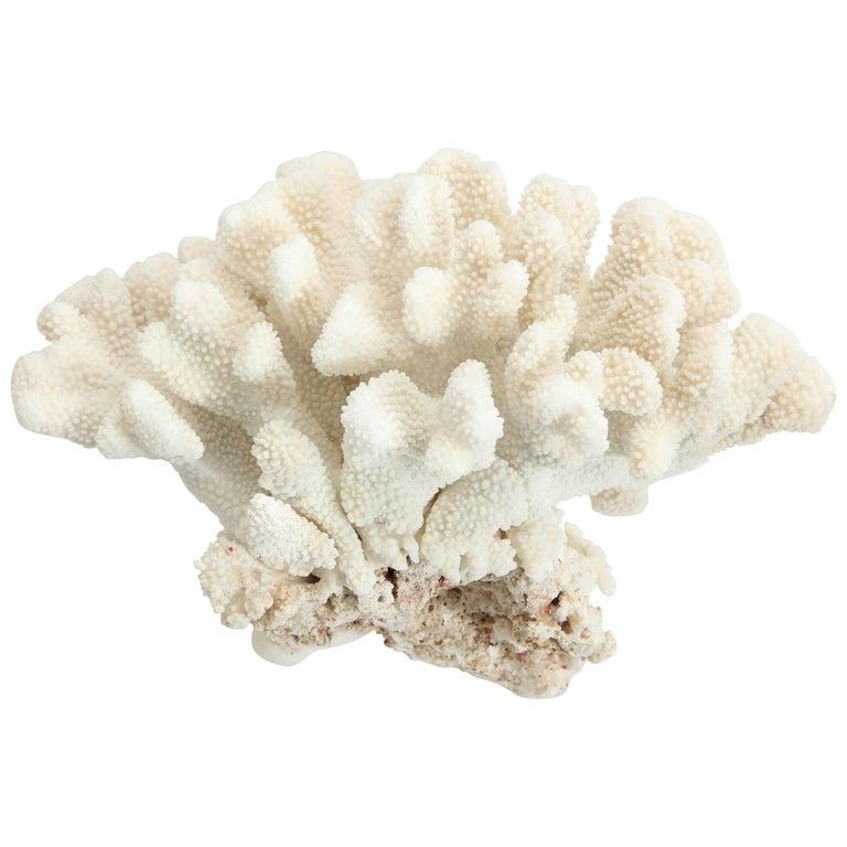 Large Coral, Vintage