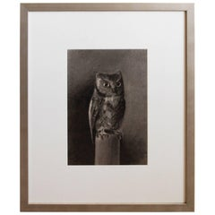 Turn of the Century Charcoal Drawing of Owl Signed  O' Donnell