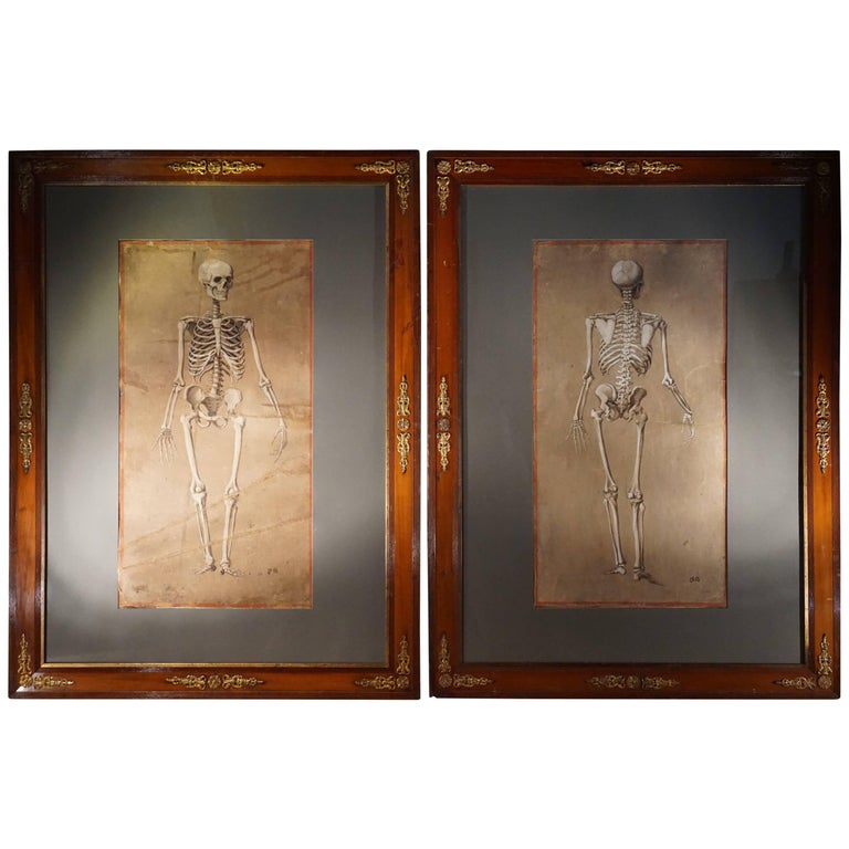 Spectacular and Rare Pair of Watercolor Paintings Representing a Skeleton