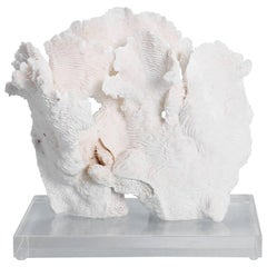 Exclusive Rugosa White Coral Sculpture Mounted on Lucite