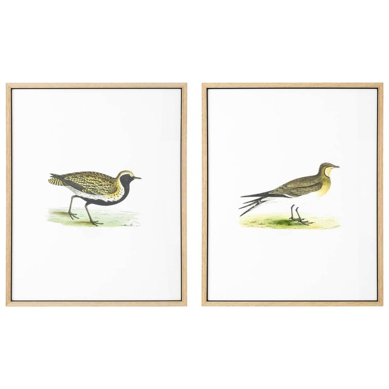Pair of 19th Century Bird Prints
