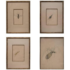 WALTER SPIES Insect Watercolour Paintings [Set of 4]