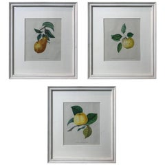 19th Century Set of Three Hand-Colored Fruit Lithographs