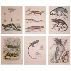 Set of Six Mid-19th Century German Prints of Lizards by Anst. V. C. Schach