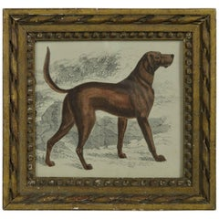 Original Antique Print of an English Sporting Dog, 1847
