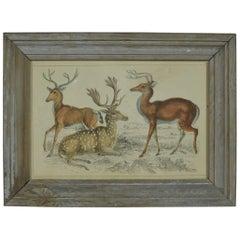 Original Antique Print of a Group of Deer, 1847