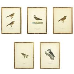 Twelve 19th Century Bird Prints
