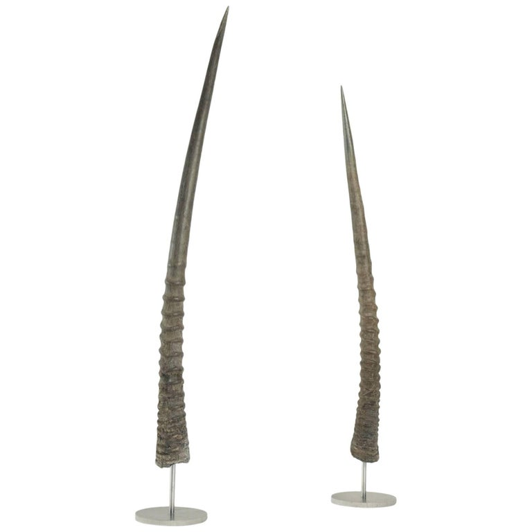 Pair of African Antelope Horns Mounted on Base of Stainless Steel