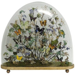 Splendid and Unique Wunderkammer Diorama with Butterflies and Flowers