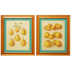 19th Century Pair of English Botanical Fruit Study Lithograph Prints