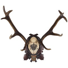 19th Century Habsburg Red Stag Trophy of Emperor Franz Joseph from Austria