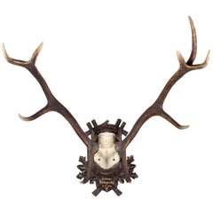 1940s German Red Stag Trophy on Black Forest Plaque from Grünau Valley Austria