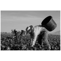 """Farm Workers in Coachella"" Print by Gregg Felsen"