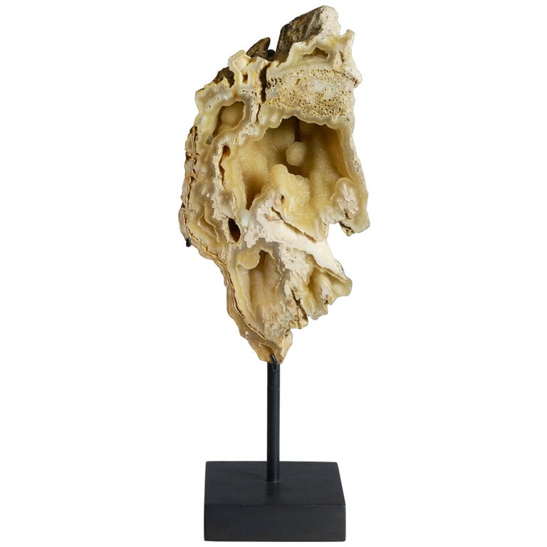Fine Specimen of Fossilized Coral