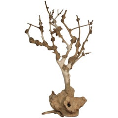 Old Natural Burl Root Tree Form Sculpture
