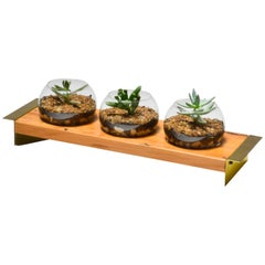Plié Wood, Brass and Glass Terrarium by O Formigueiro