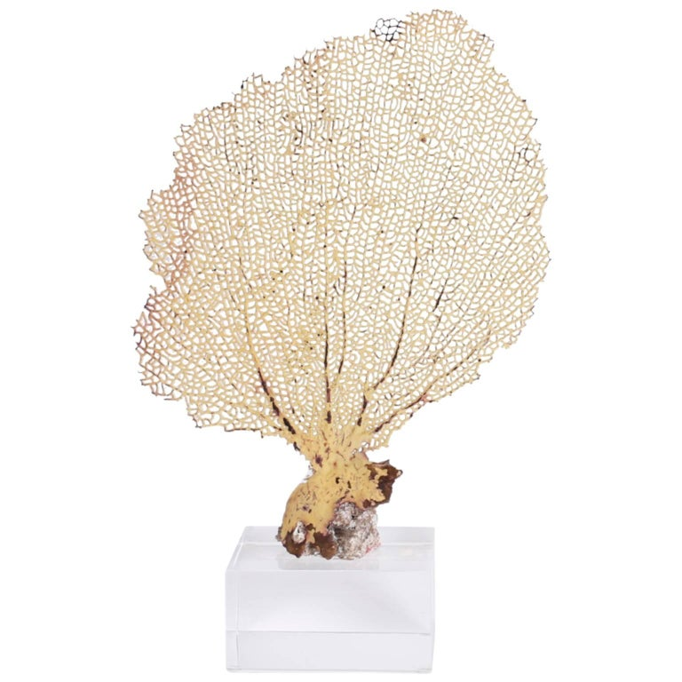 Charming Yellow Sea Fan on Lucite