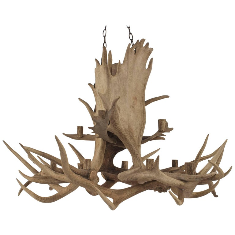 Rustic Moose And Elk Antler Chandelier With 11 Cylindrical
