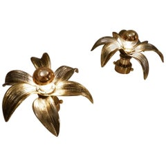 Brass Flower Wall Lights, a Pair by Massive, 1970s, Belgian, Willy Daro Style