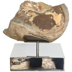Organic Modern Petrified Wood/ Fossil and Stainless Steel Mounted Sculpture