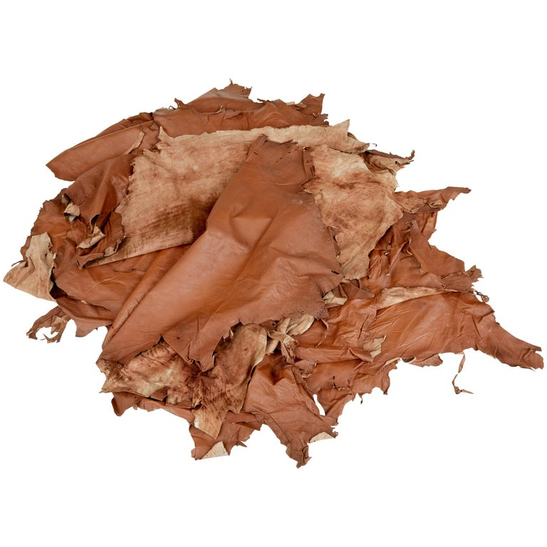 Collection of Ten Tan Cow Leather Hides for Upholstery