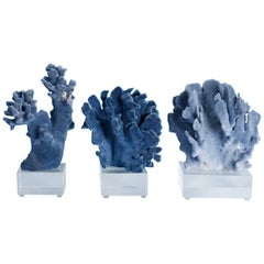 Two Blue Coral Specimens on Lucite, Priced Individually