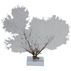 White Sea Fan on a Lucite Base