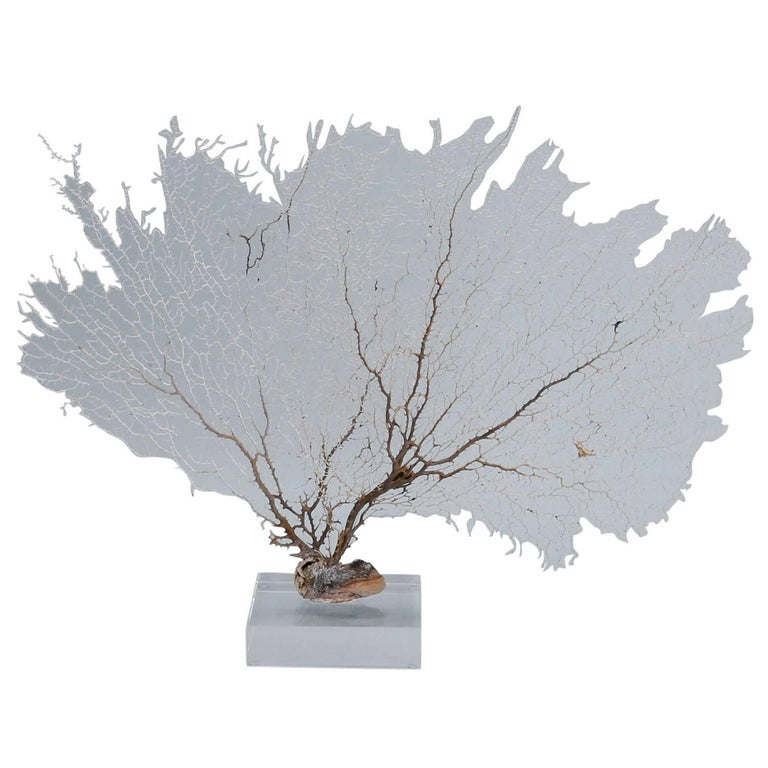 Off-White Sea Fan Mounted on Lucite For Sale