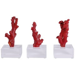 Three Red Coral Specimens Mounted on Lucite, Priced Individually