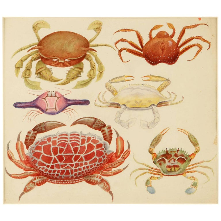 Late 19th Century Watercolor of Crabs