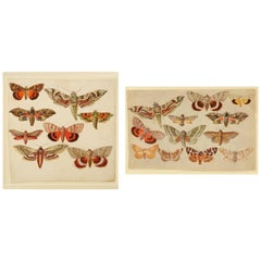 Pair of Late 19th Century Watercolors of Moths and Butterflies