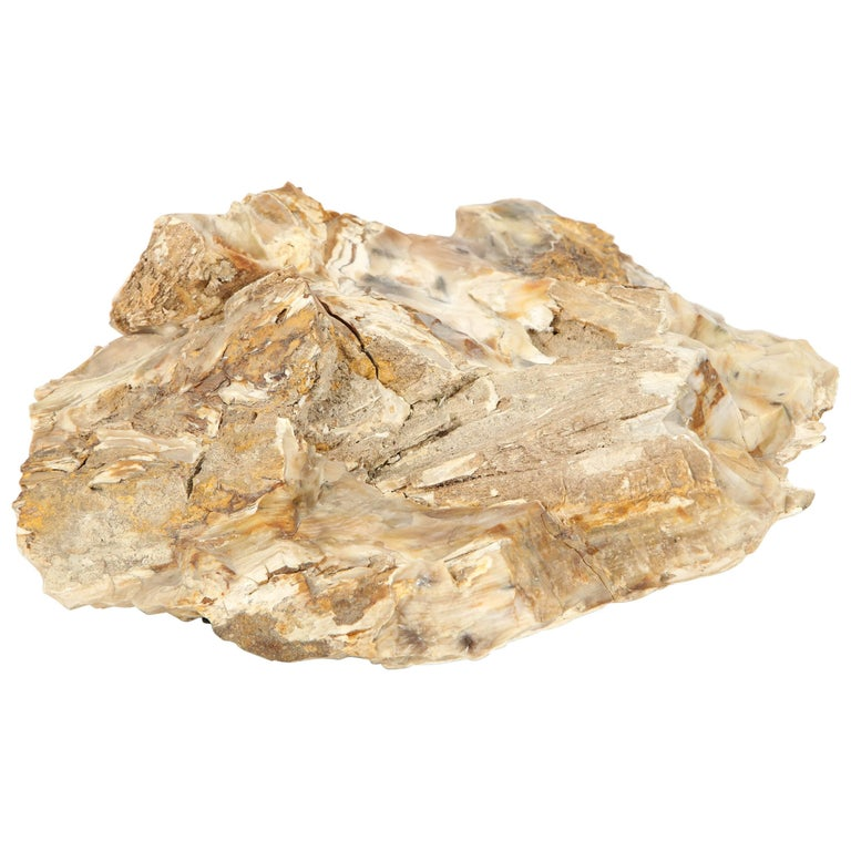 Large Petrified Wood Specimen For Sale