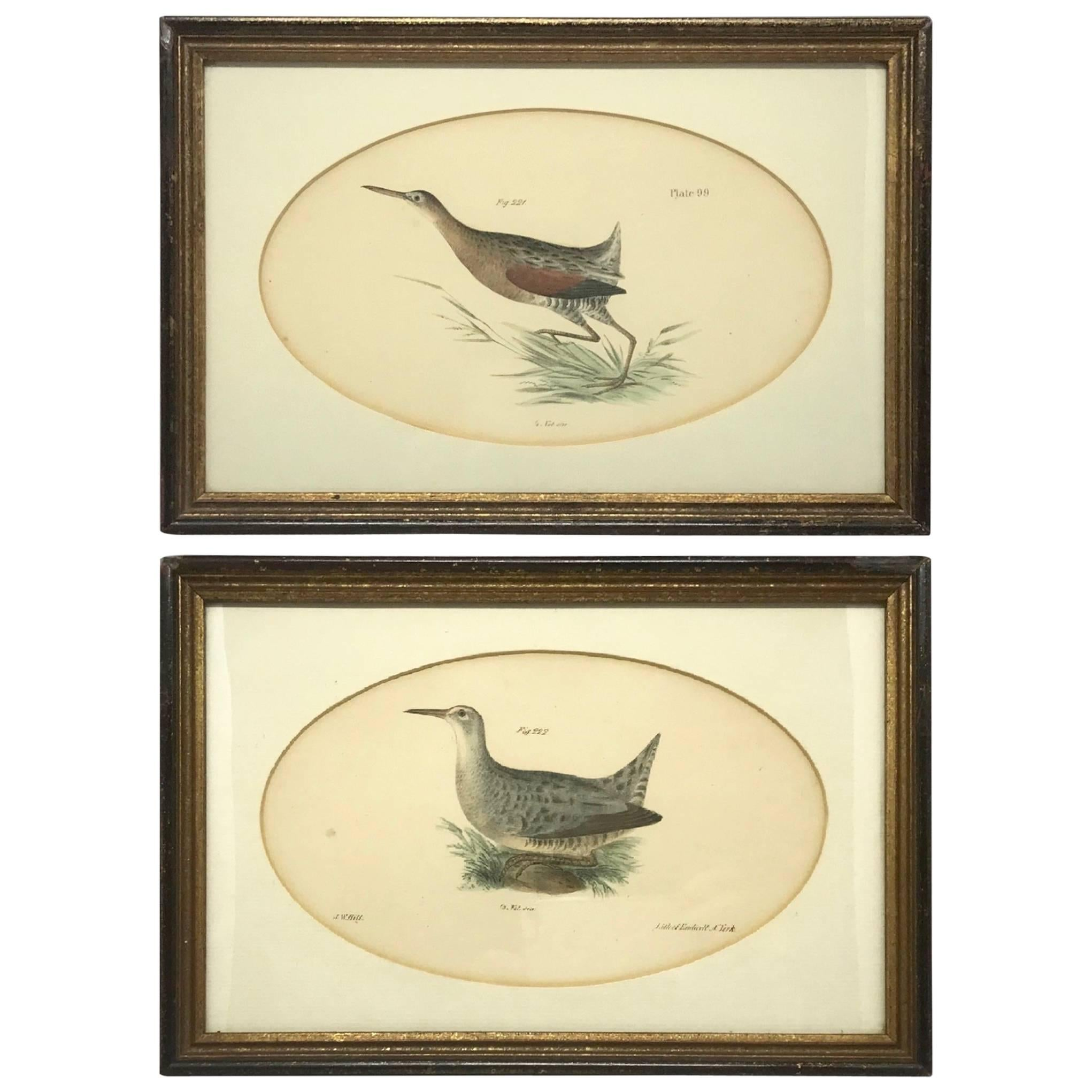 Pair American Hand-Colored Bird Lithographs
