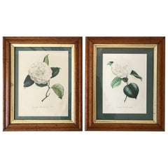 Two N. Remond Botanical Prints in Tiger Maple Frames, 19th Century