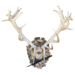 Bleached Habsburg Red Stag Antlers on Rococo Plaque with Kaiser & King Hunt Horn