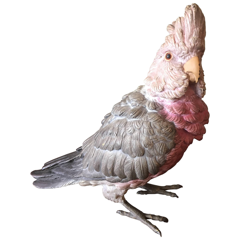 Erotic wear cockatoo
