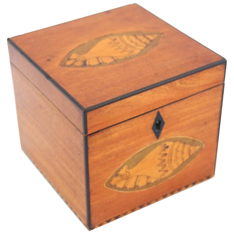 19th Century Satinwood Tea Caddy with Conch Shell Inlay