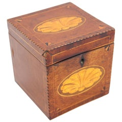 Regency Mahogany Tea Caddy with Conch Shell Inlay