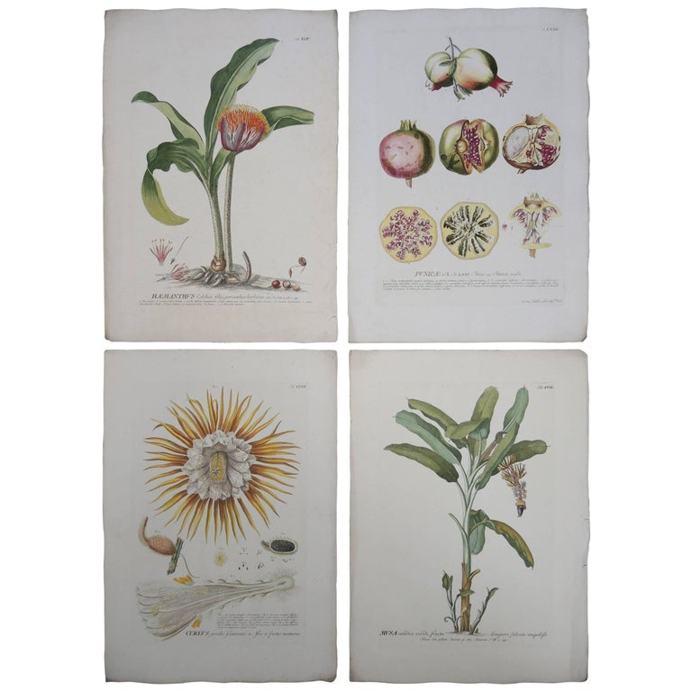 Four 19th Century French Hand Colored Botanical Engravings of Exotic Flora