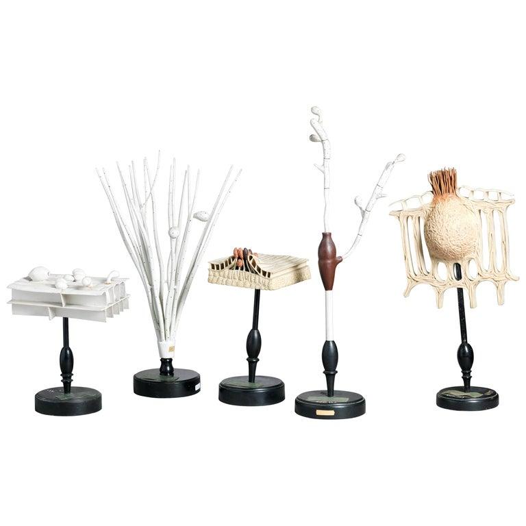 Five 19th Century Botanical Models, Turned Ebonized Wood Stands Reinhold Brendel