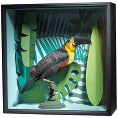Taxidermy Toucan Mounted in Designer Display Case