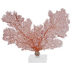 Red Sea Fan on Lucite