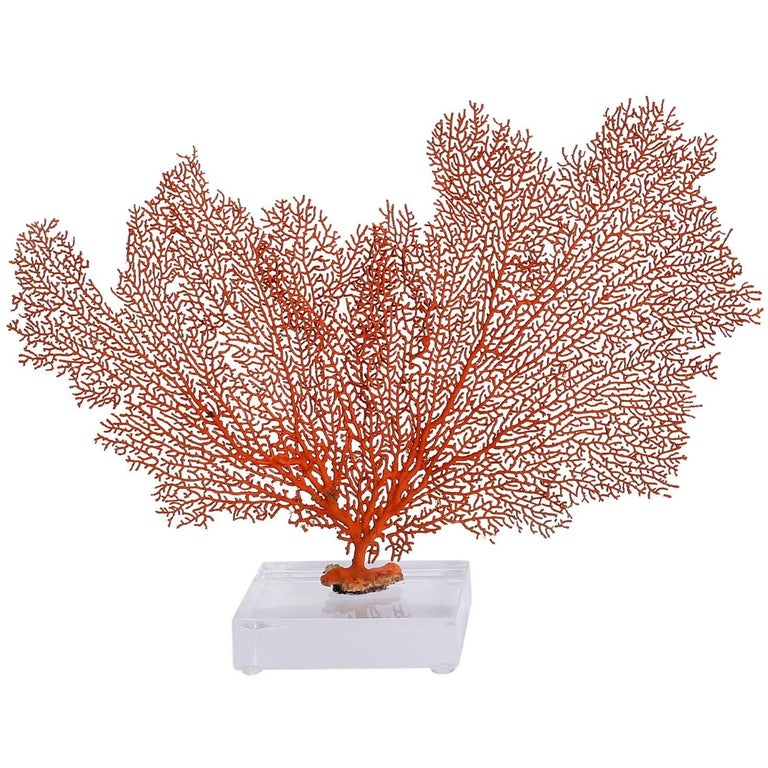 Red Sea Fan on Lucite For Sale