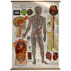 Vintage Anatomical Pull Down Chart 'Nervous Systems, GH Michel Company