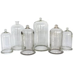 Collection of Antique Glass Cloches
