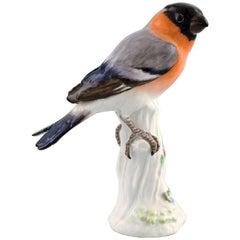 Meissen Figure, Bird in Porcelain